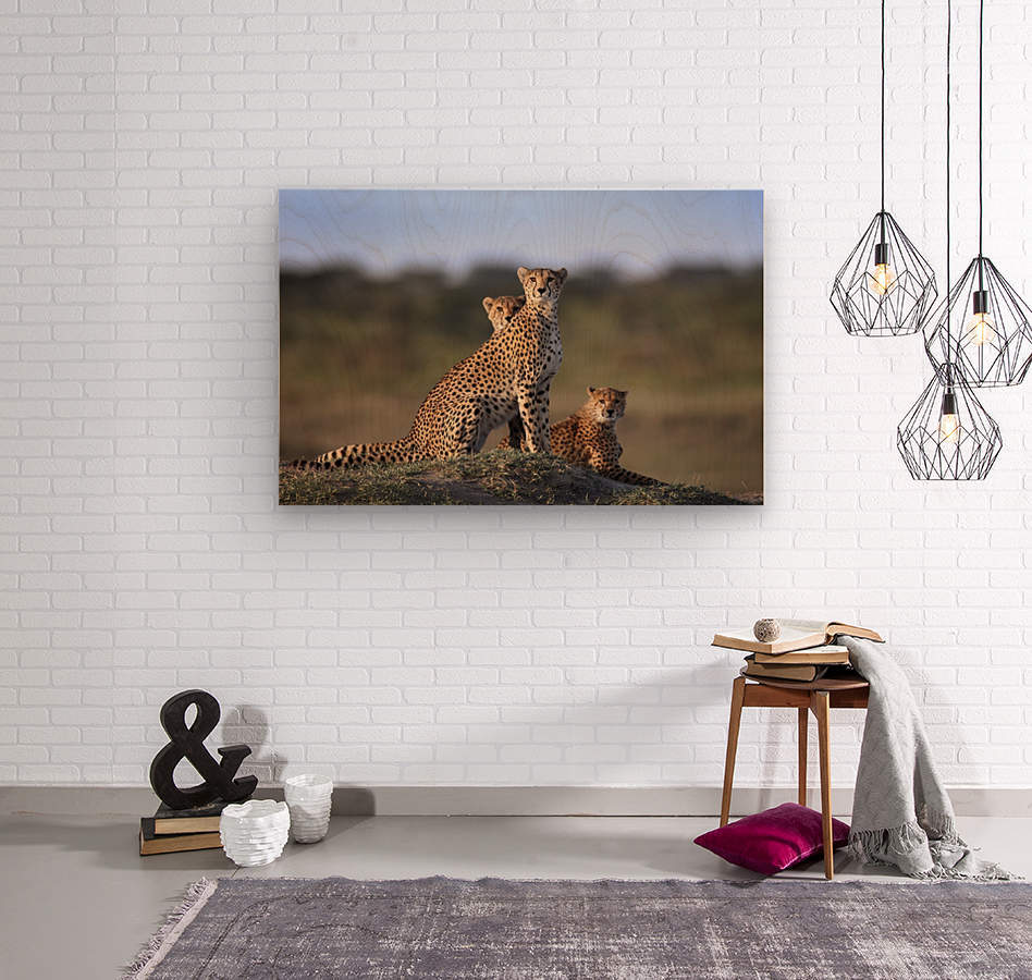Cheetahs Family  Wood print