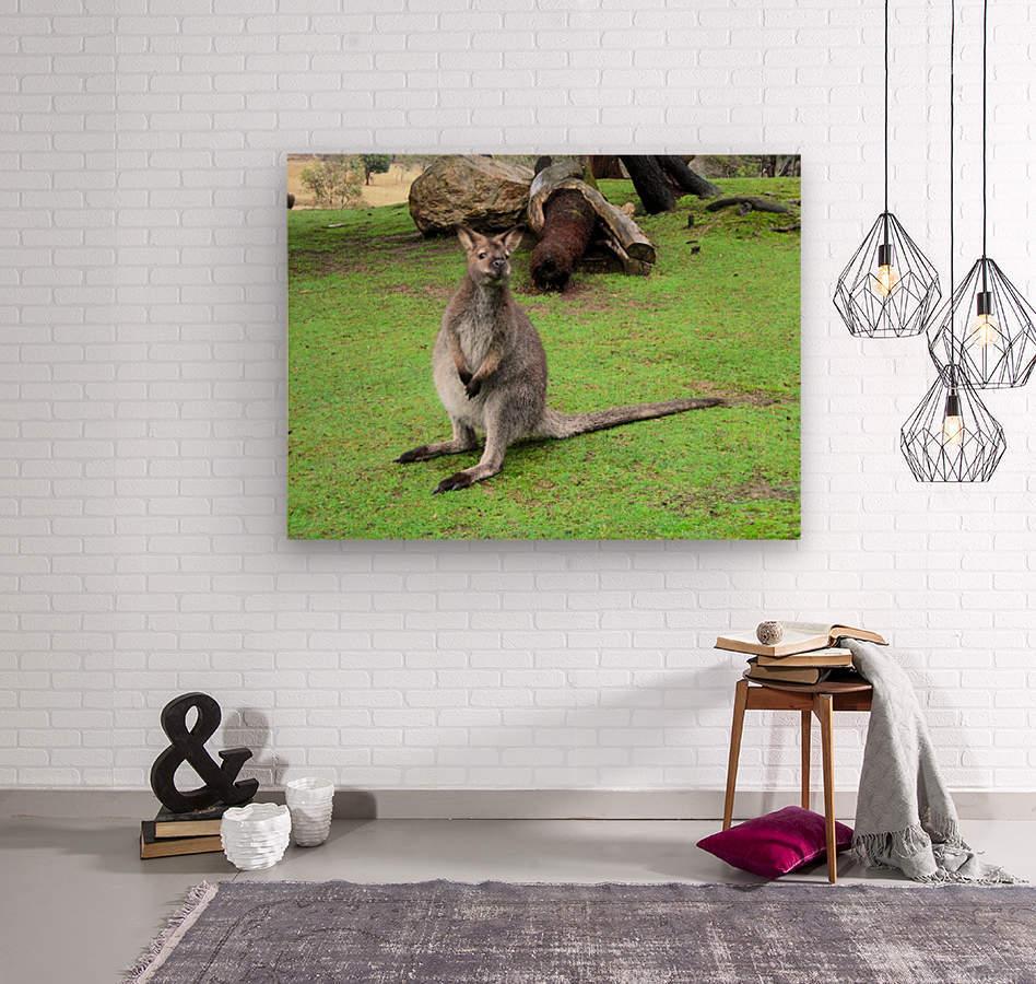 Animal16  Wood print