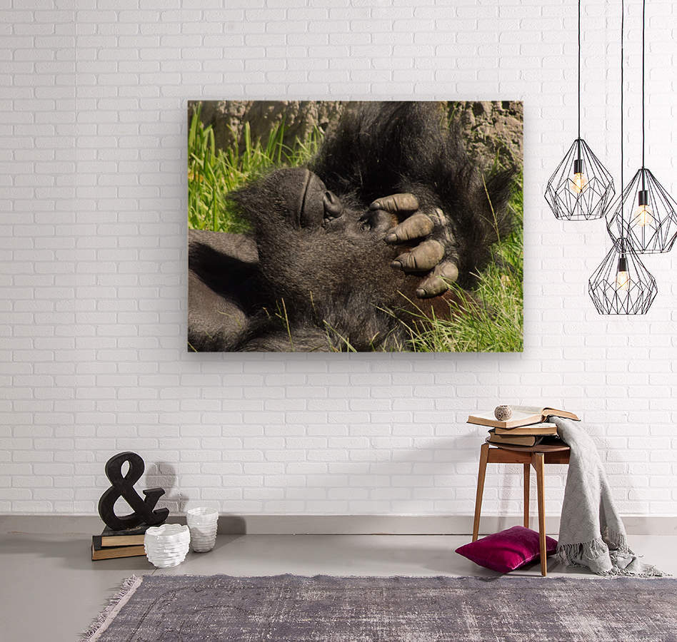 Gorilla Headache  Wood print