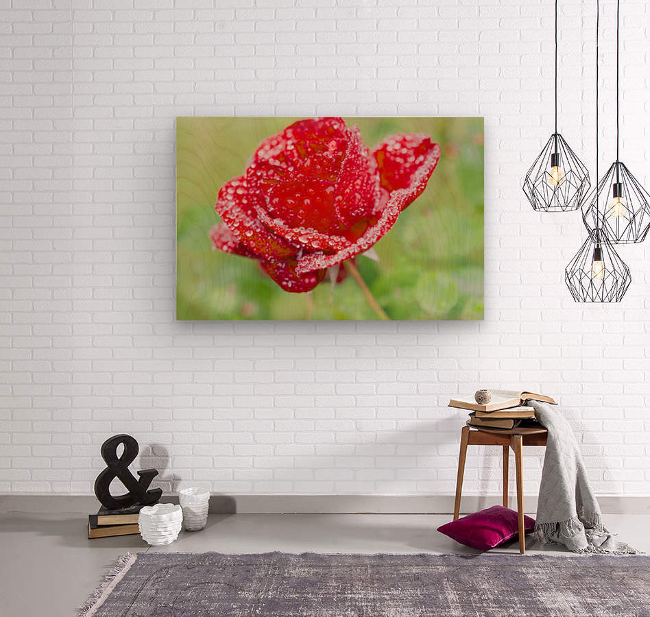 Raindrops and Roses  Wood print