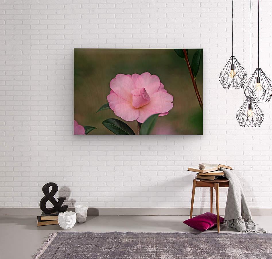 Pink Camellia  Wood print