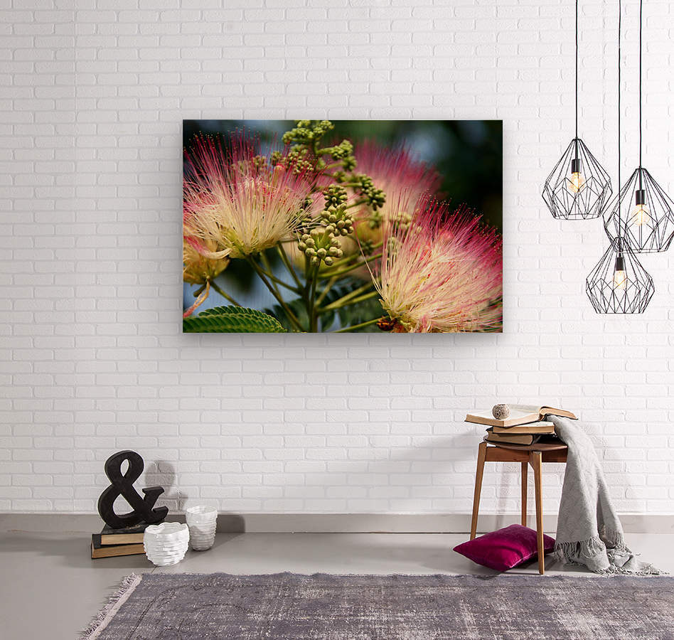 Delicate Pink and White Southern Flower  Wood print