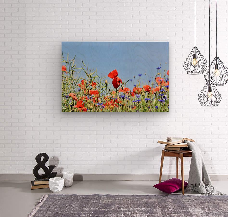 poppy, alpine cornflower, centaurea montana, flower, flower meadow, blossom, bloom, flora, plant, wild flower, garden, meadow, nature, field, petals, leaves, stems,  Wood print