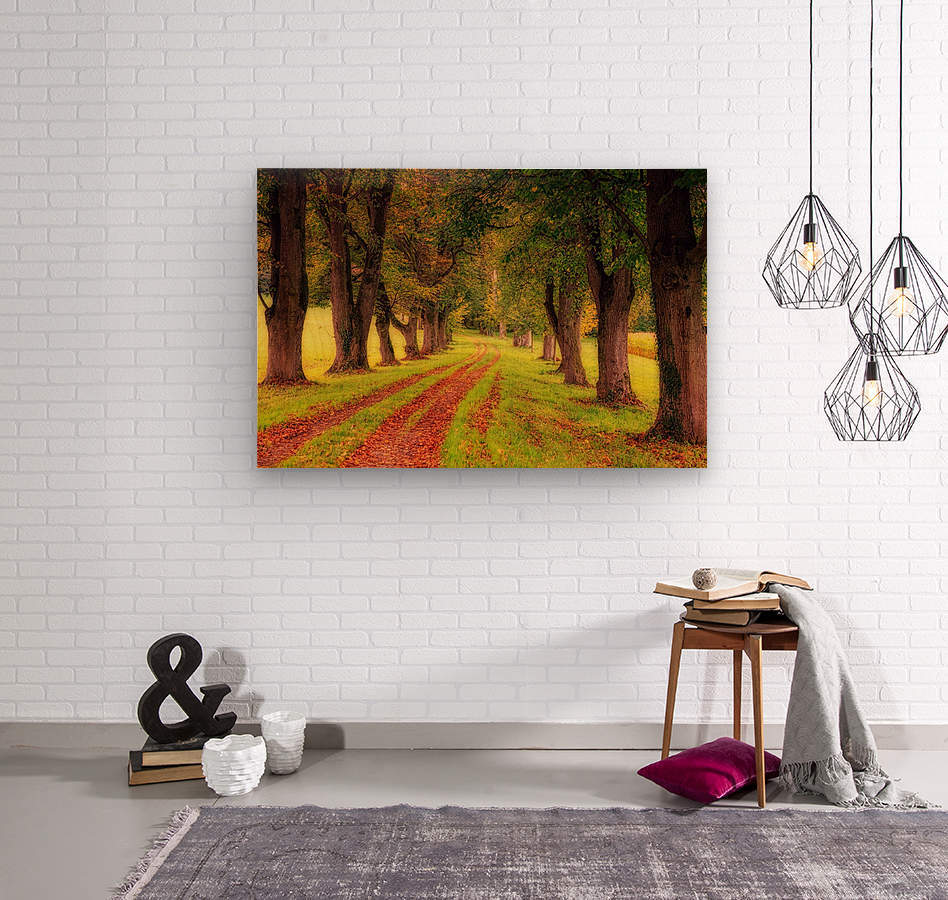 tree, avenue, nature, landscape, tree lined avenue, away, distance, trail, autumn, leaves, forest, green, mood, green leaves, lane, path,  Wood print
