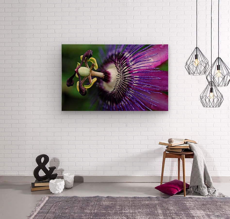 Passion Flower In Purple  Wood print