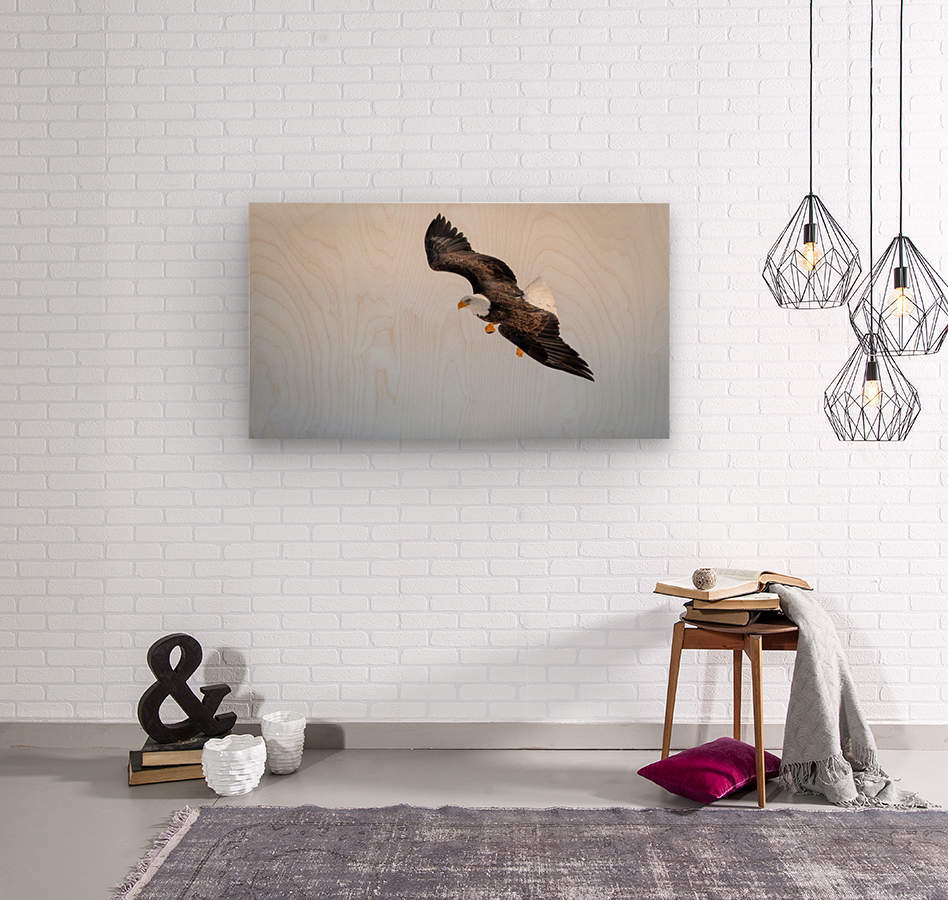 Mature Bald Eagle aiming for prey.  Wood print