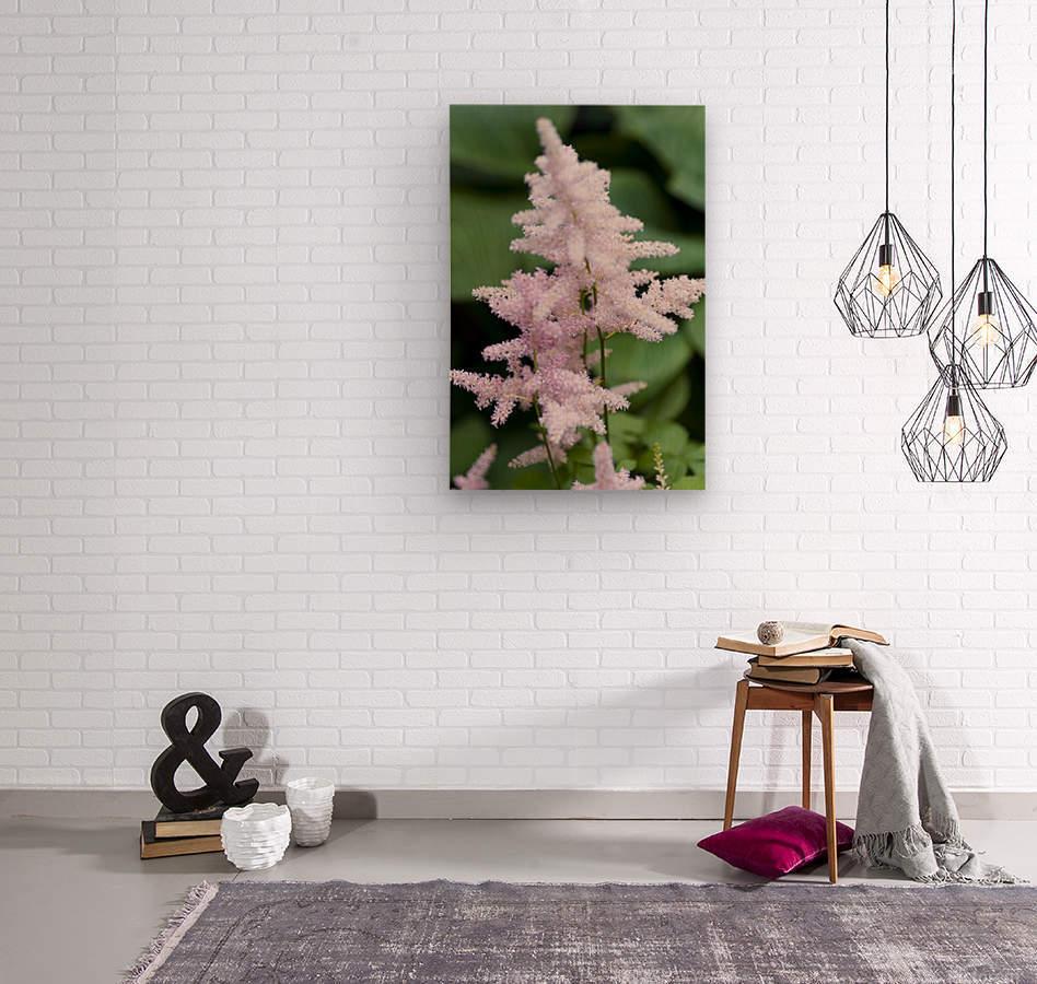 Pink Astilbe 2  Wood print