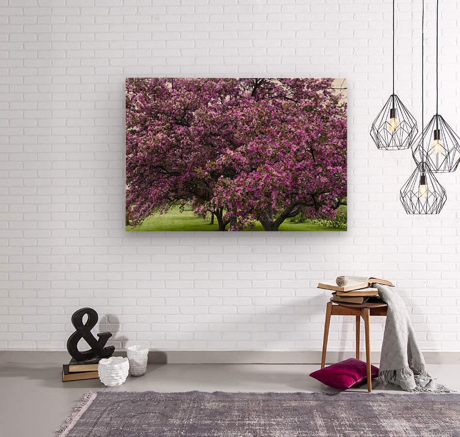 Blooming Crab Apple Trees  Wood print