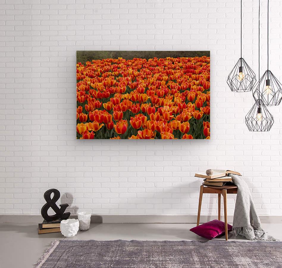 Ottawa Tulip Festival 9  Wood print