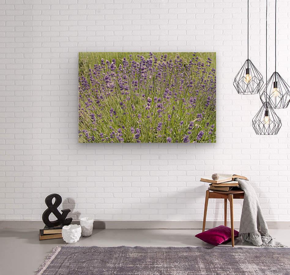 Lavender plants 7  Wood print