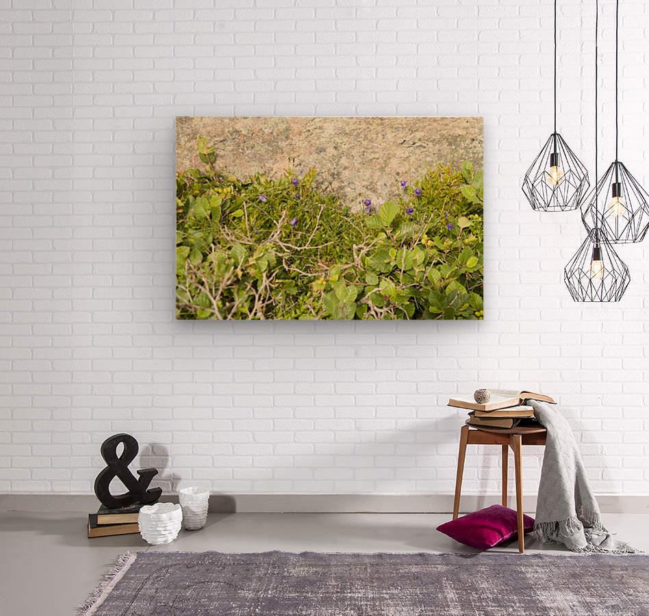 Cape Spears Flowers and vegetation   Wood print