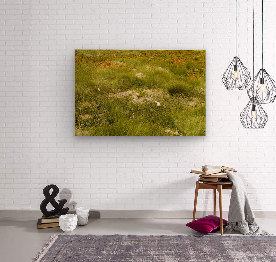 Cape Spears Flowers and vegetation 1  Wood print