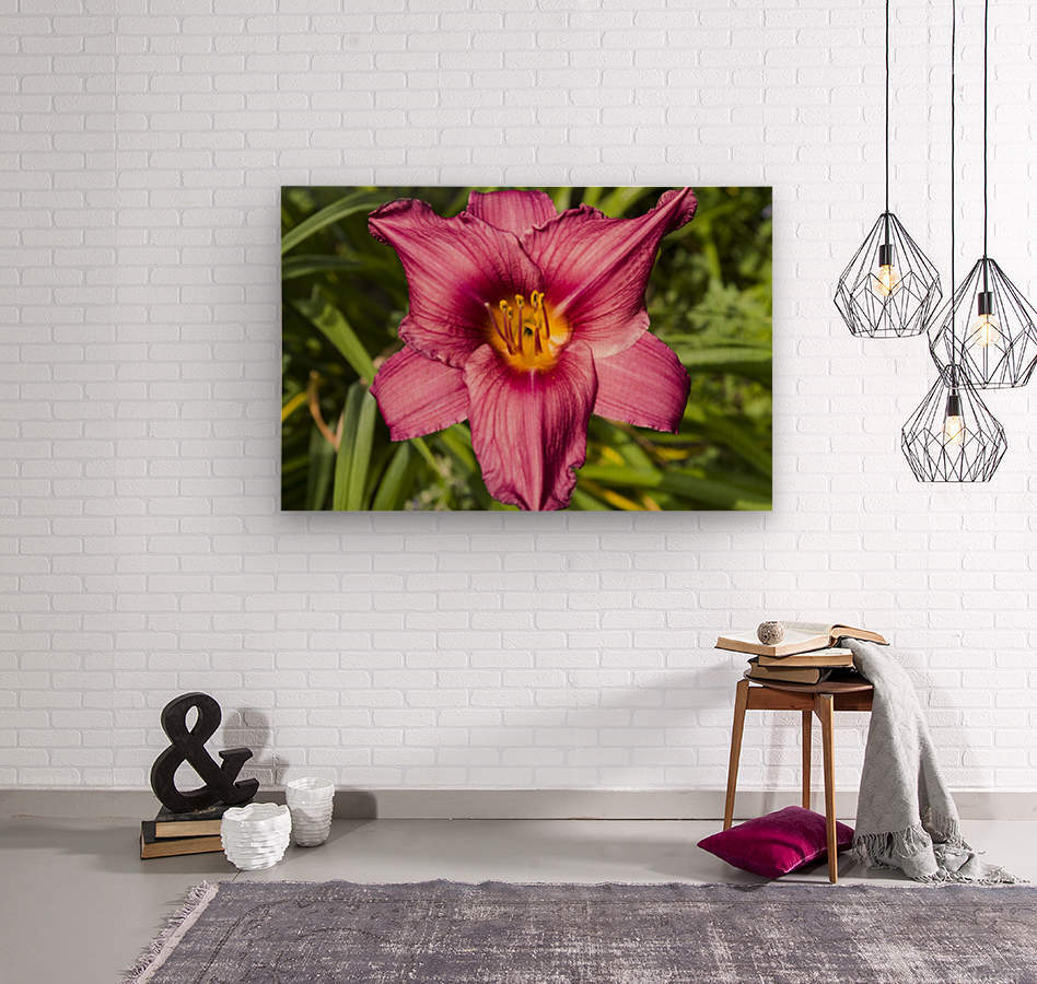Purple Stella Doro Day Lily Flowers 2  Wood print