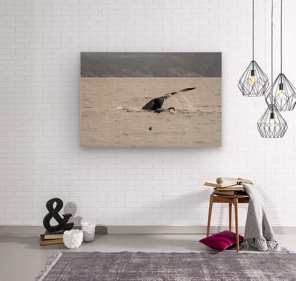 Humback whale a puffin and a murre 4  Wood print