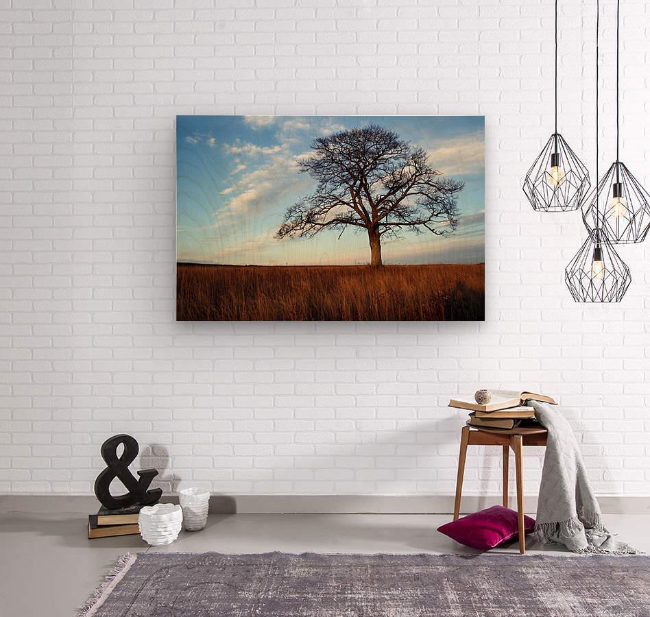 Shubenacadie Tree  Wood print