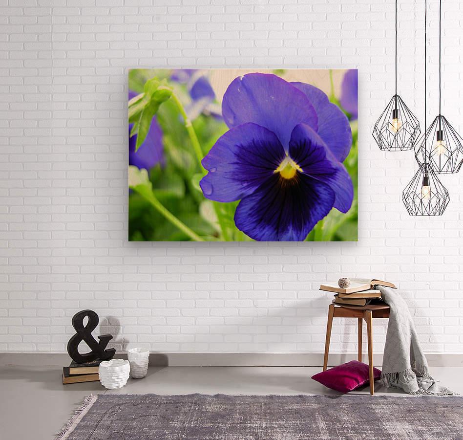 Blue Flowers Photograph  Wood print