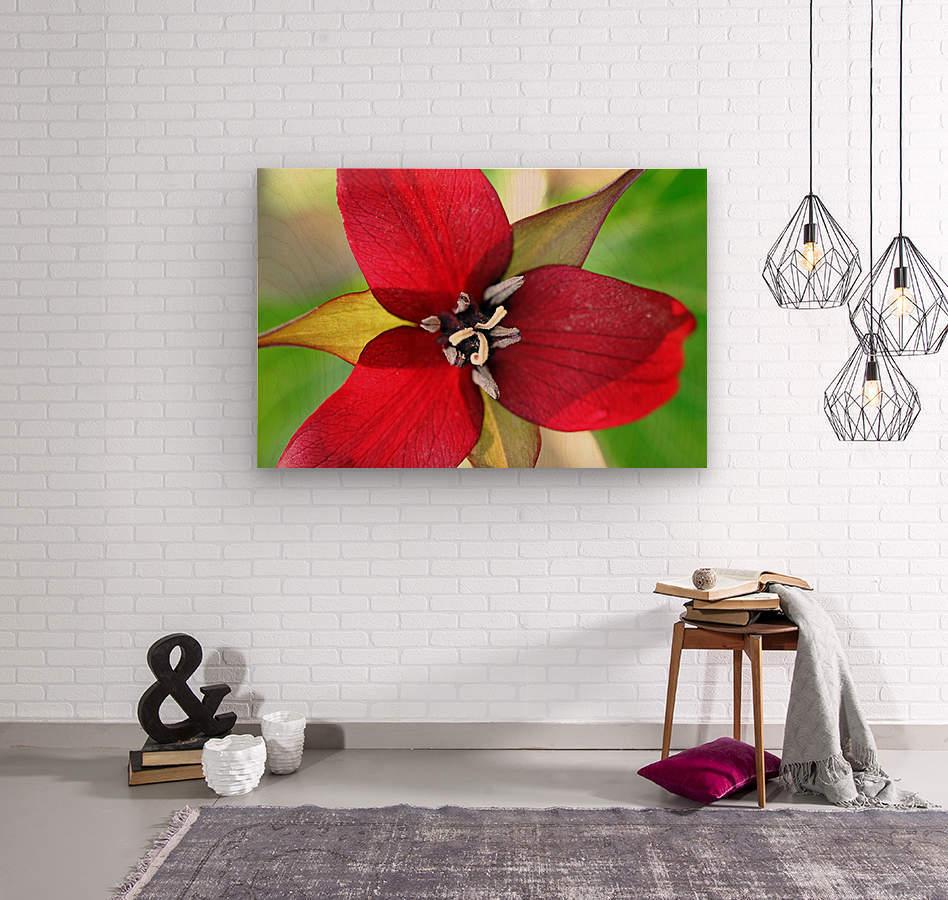 Dark Red Trillium  Wood print