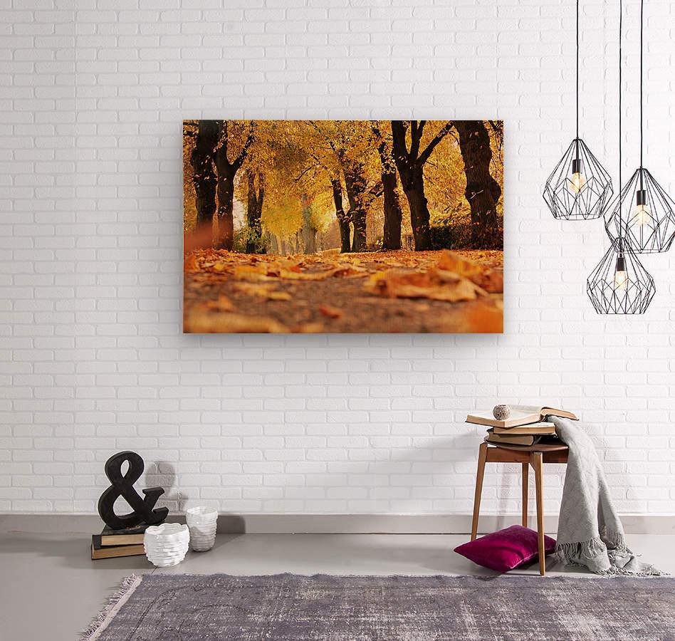 JPT 5921W  Wood print