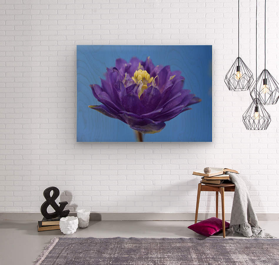 Blue Flower Photograph  Wood print