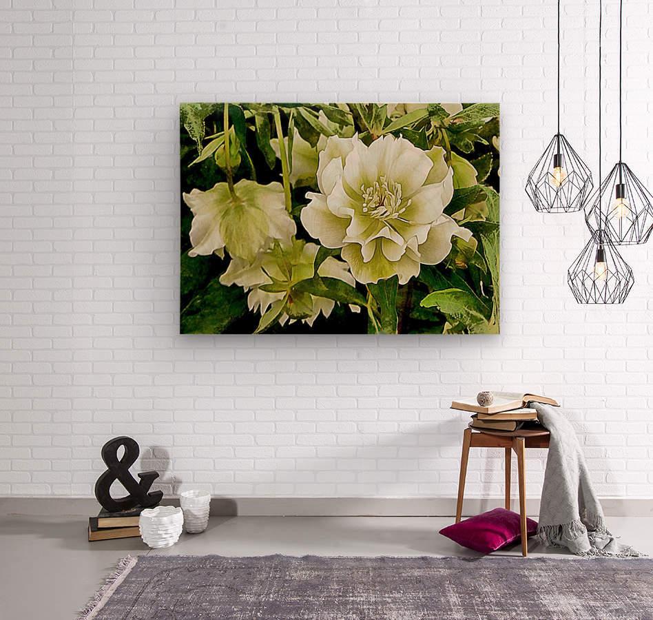 Beauty In A Lenten Rose  Wood print