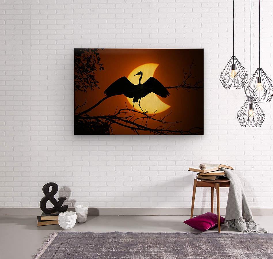 Egret Eclipse  Wood print