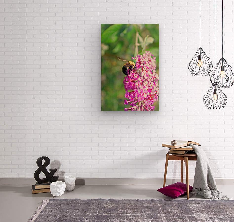 Bumblebee on a Flower  Wood print
