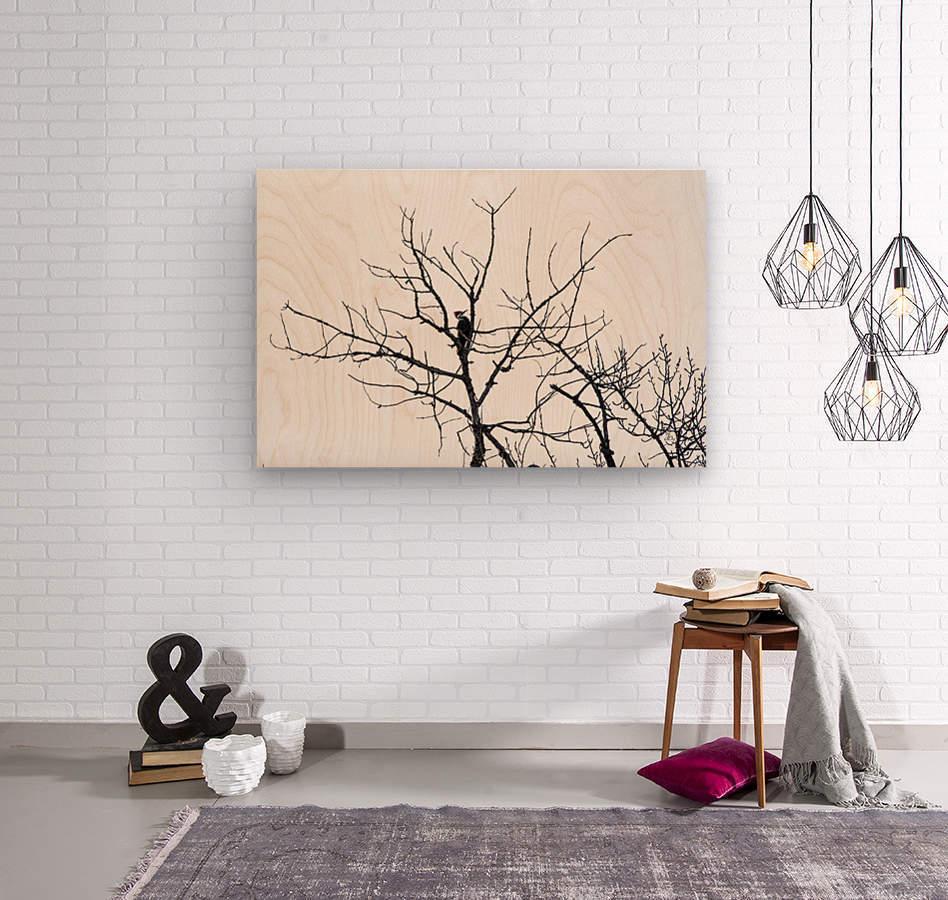 Pileated Woodpecker - Large  Wood print
