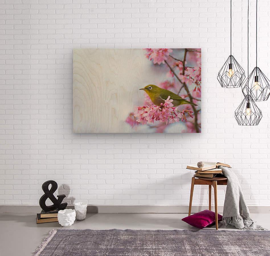 Bird In Sakura Cherry Blossom Tree  Wood print