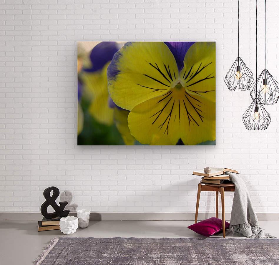 Yellow Pansy Photograph  Wood print
