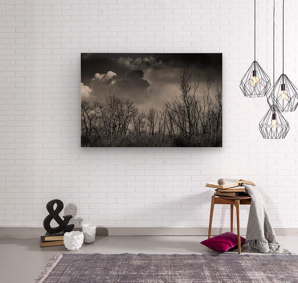 Magee Marsh 1  Wood print