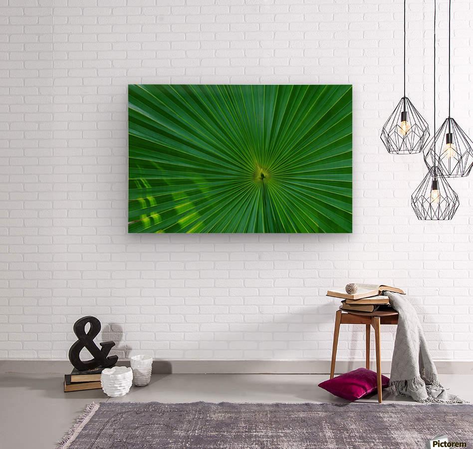 Palm tree detail  Wood print