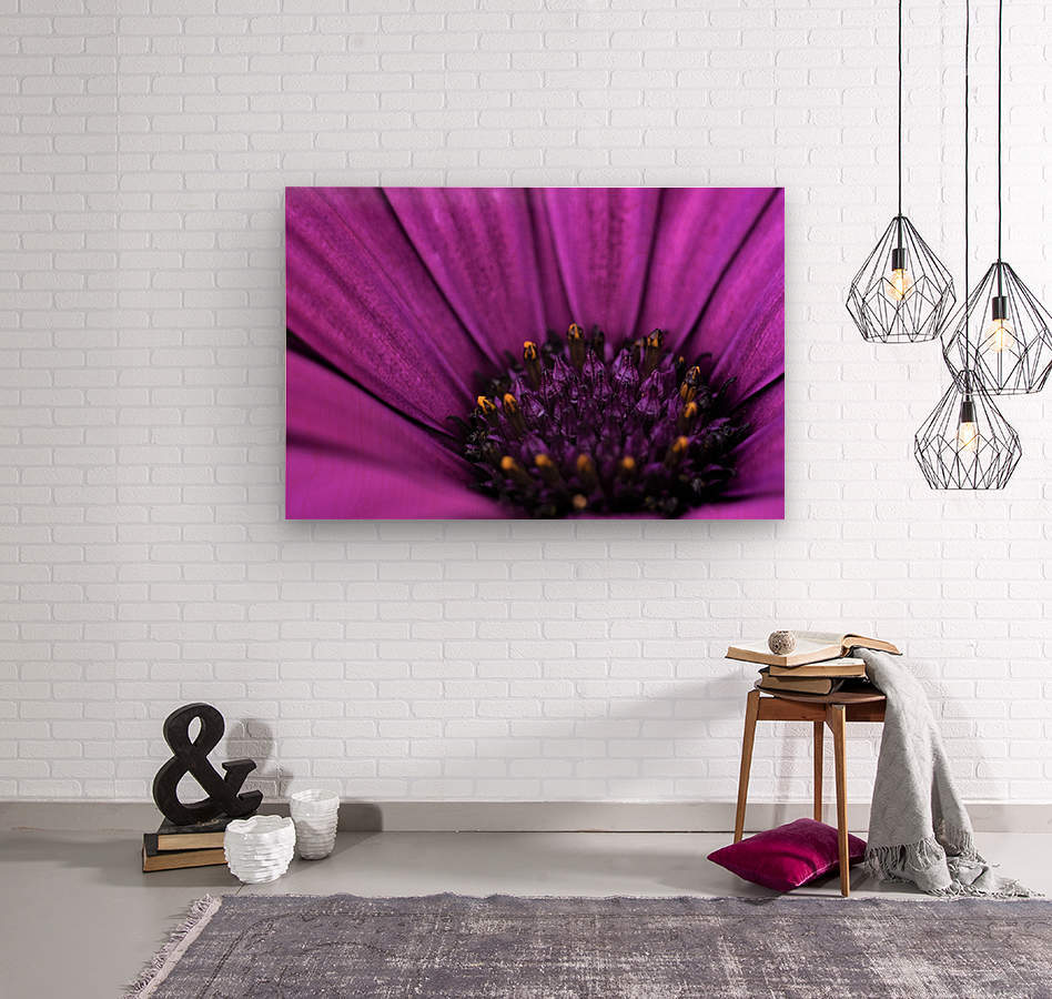 Purple Osteospermum Daisy Photograph Macro  Wood print
