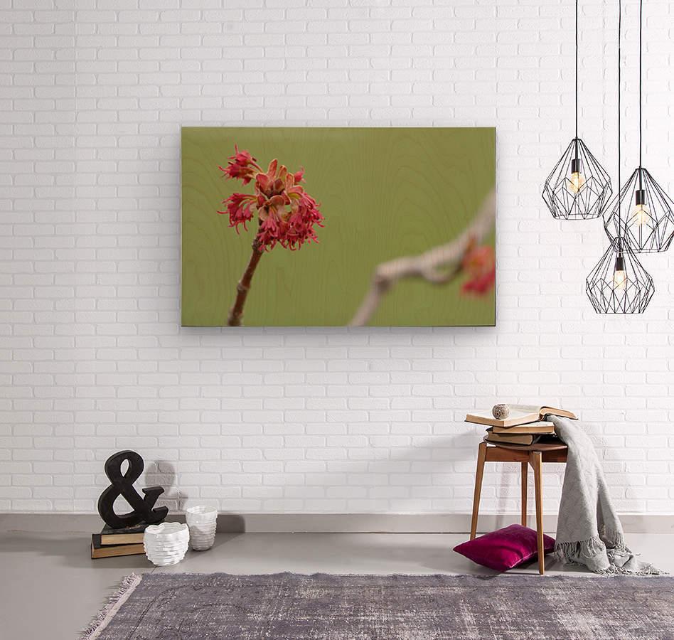 Blooming 2  Wood print