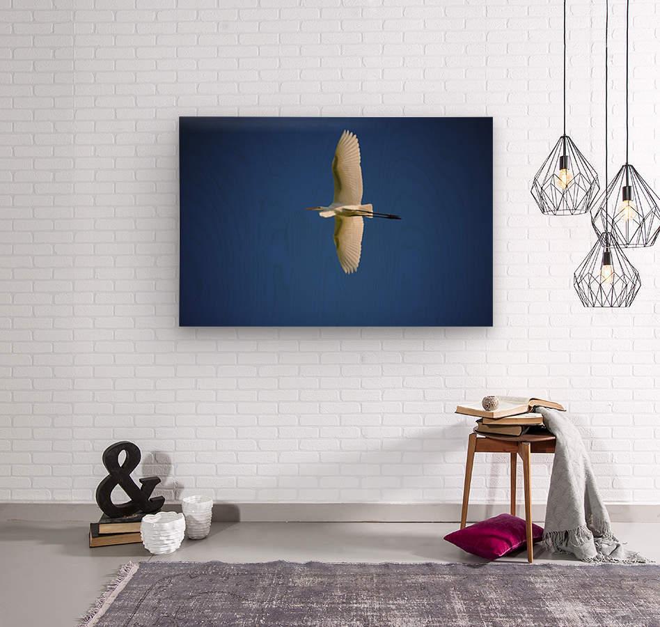 Egret Sailing Above  Wood print