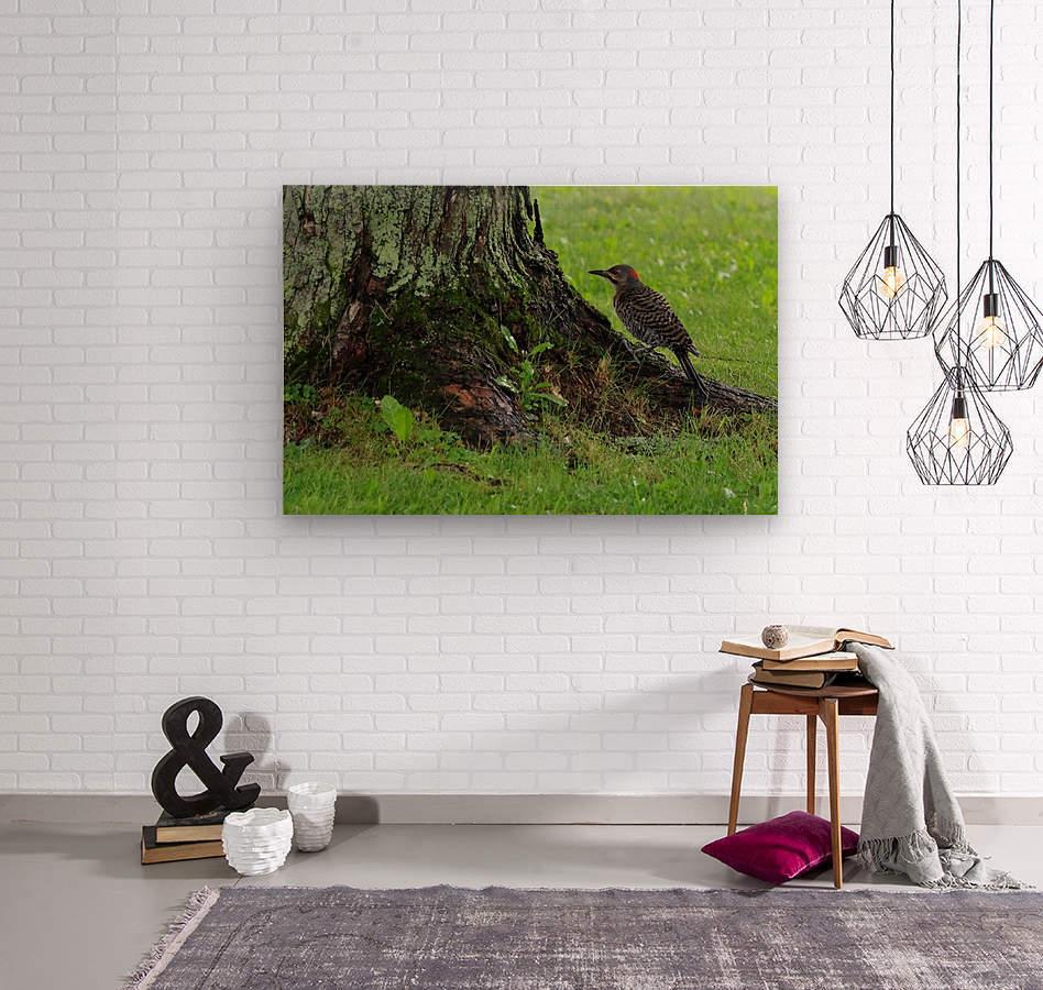 Pic flamboyant   Wood print