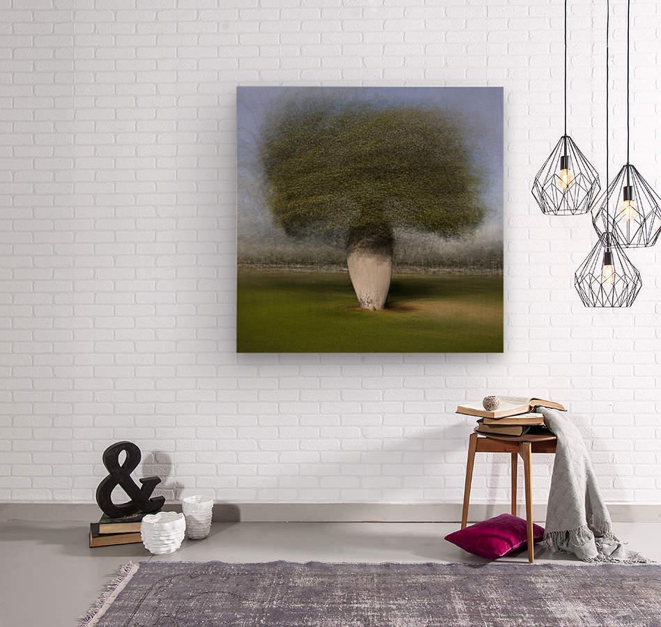Ceiba speciosa  Wood print