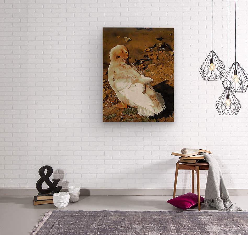 Buff Orpington Duck Preening  Wood print