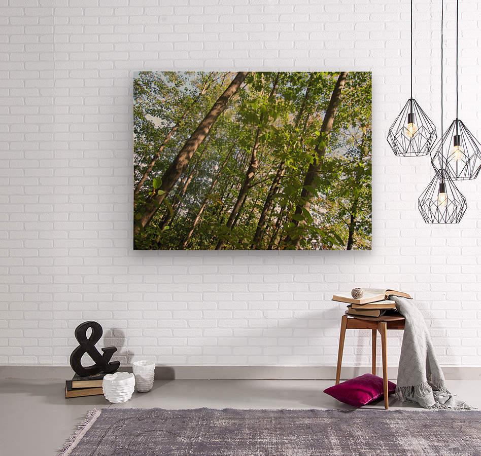Landscape (108)  Wood print