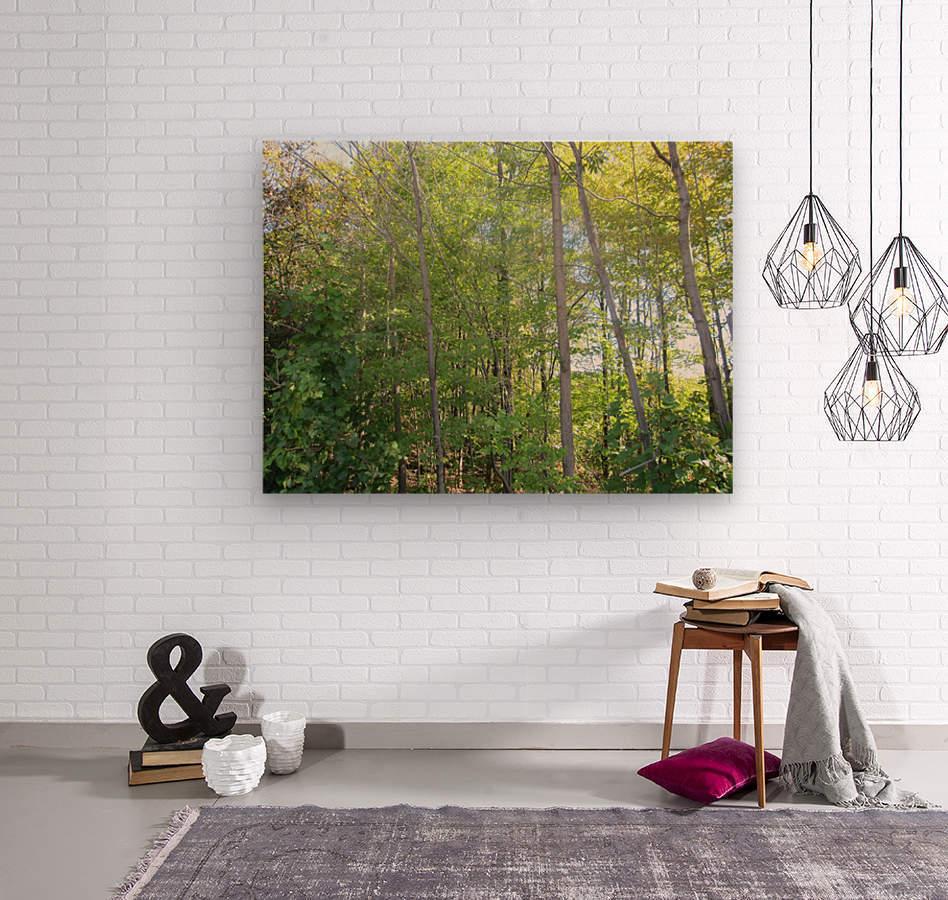 Landscape (288)  Wood print