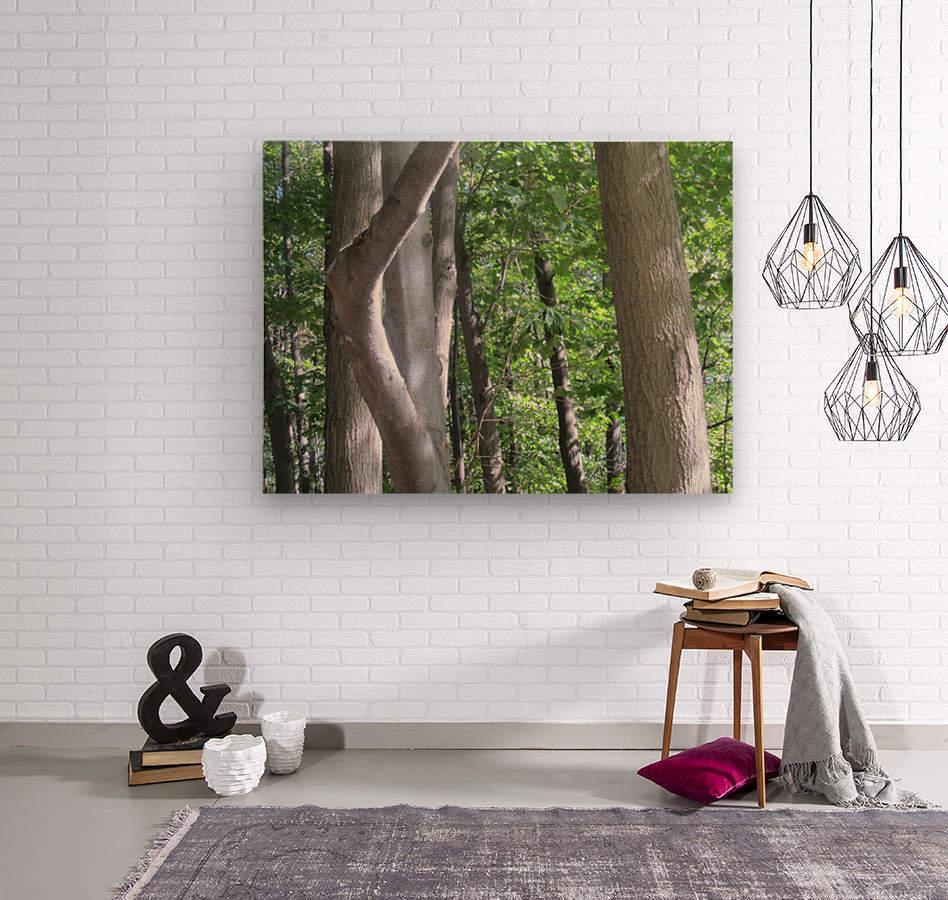 Landscape (266)  Wood print