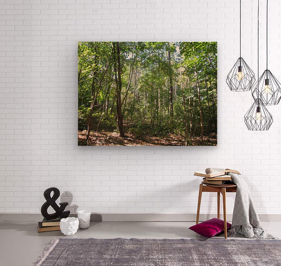 Landscape (176)  Wood print