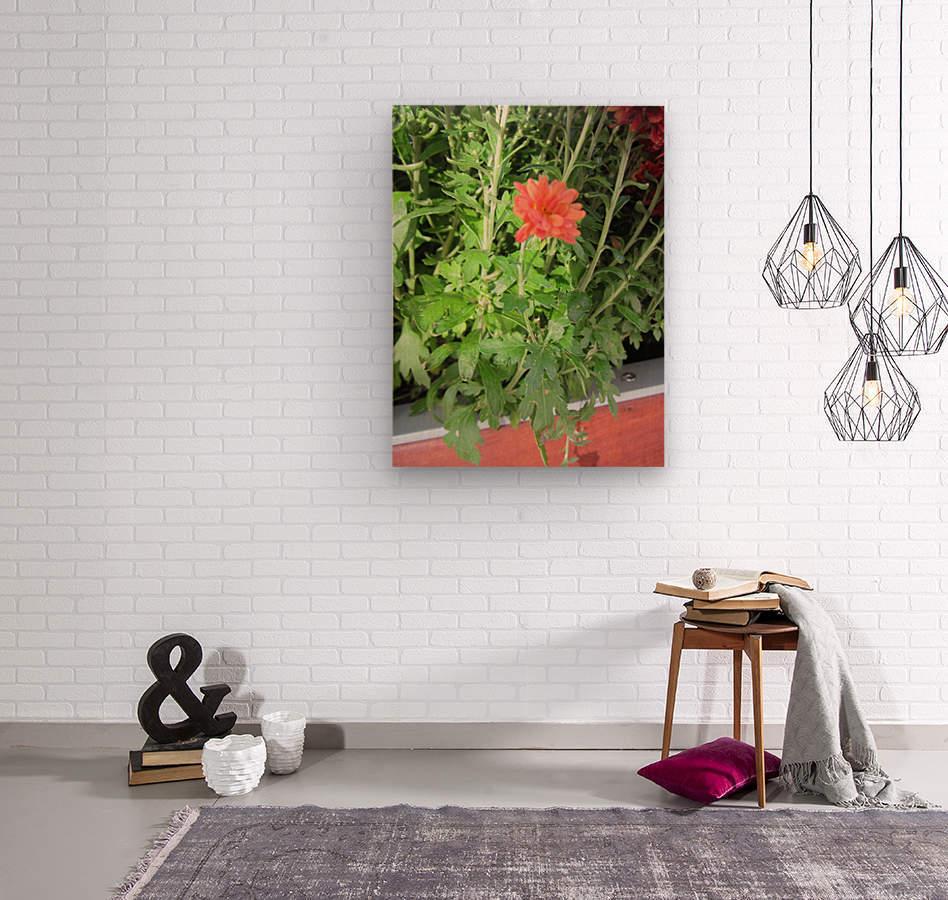 Flowers (55)  Wood print