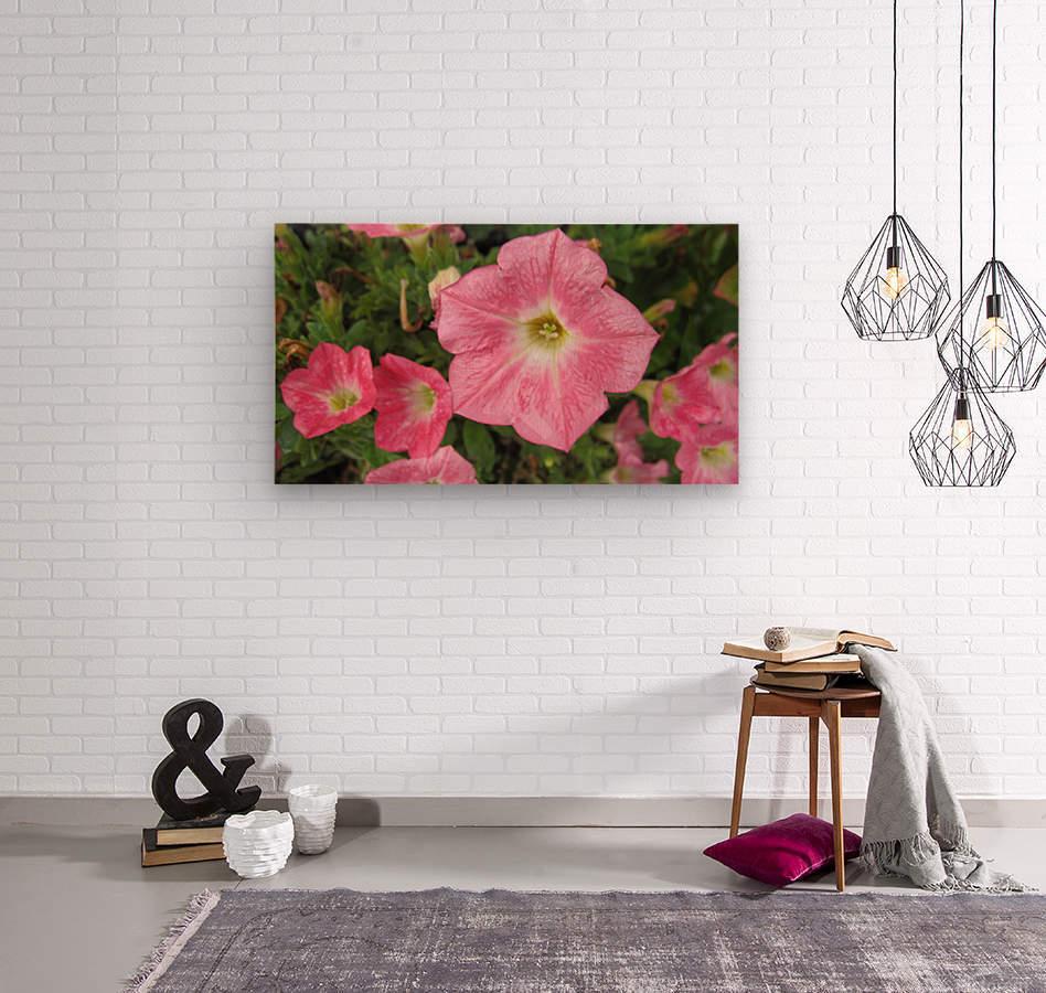 Flowers (86)  Wood print