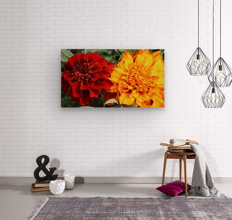 Red and Yellow Marigolds 062718  Wood print