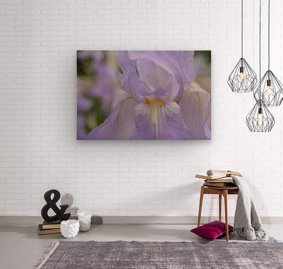 Pale Blue Iris Photograph  Wood print