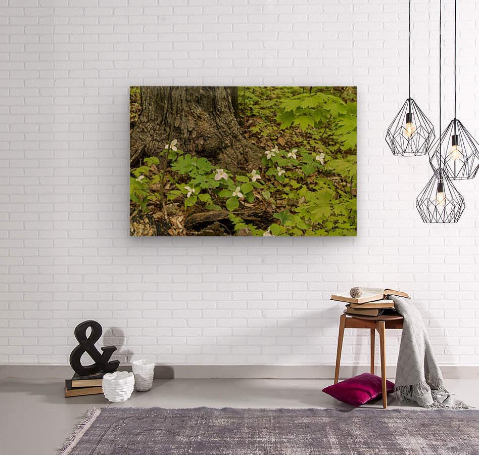 Trillium Woods 10  Wood print