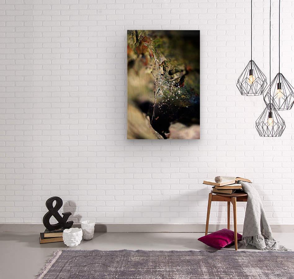 Macro Raindrop Photography Art 05  Wood print