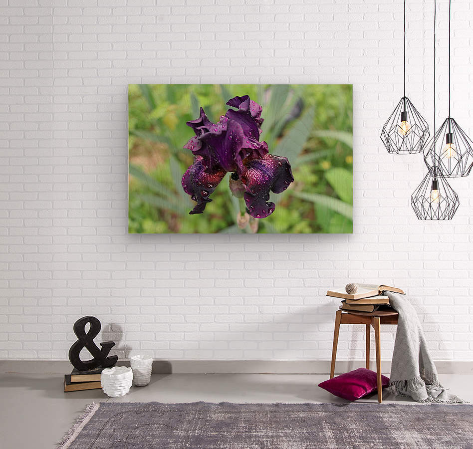 Purple Iris  Impression sur bois
