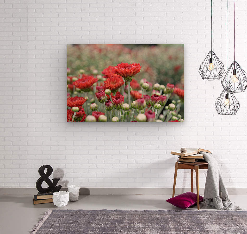 Red Flower Photograph  Wood print