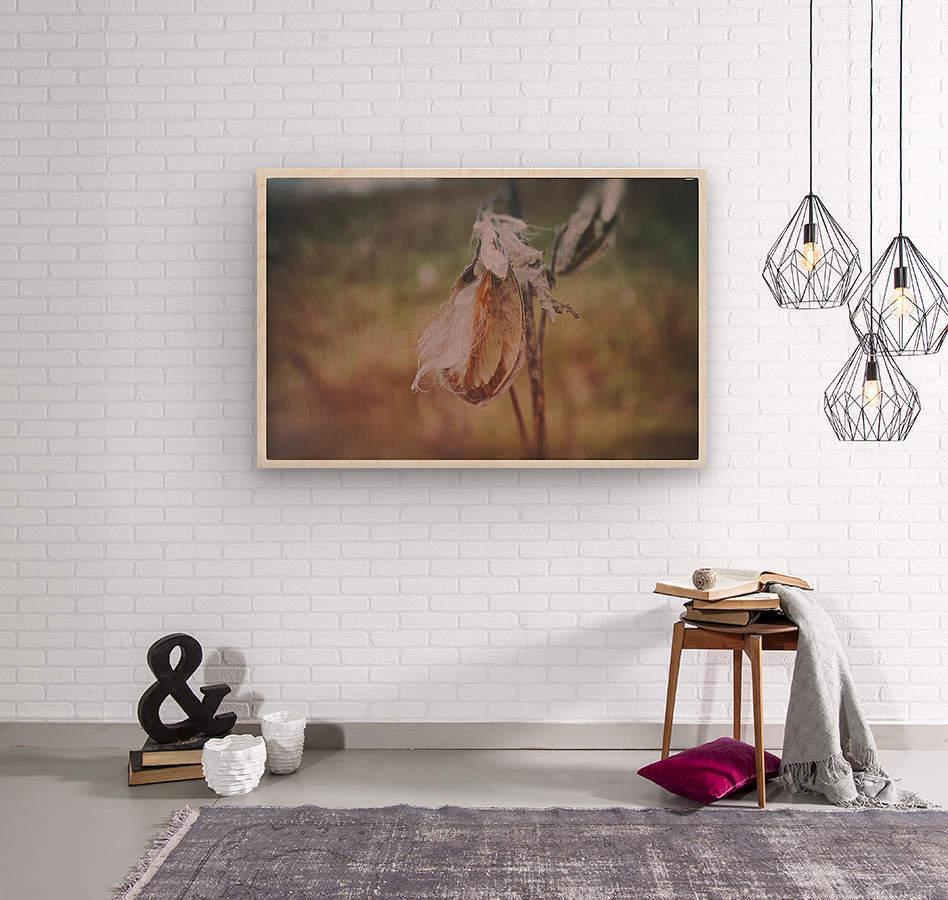 Milk Weed  Wood print